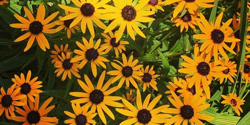 flowers_gathering